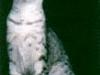 GC J\'s Iris Another Mau 2 Feed Of Emau